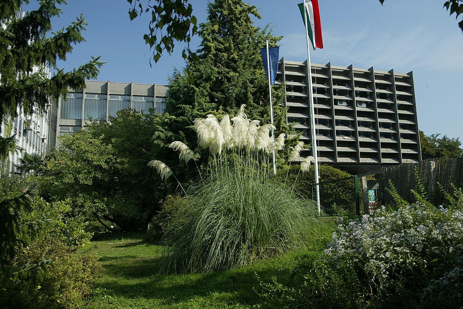 A Budai Campus 'K' épülete, előtte pampafű virágzik